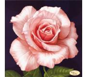 Схема для вышивки бисером Роза Афродита
