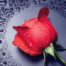Набор в технике алмазная вышивка Красная роза