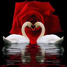 Набор в технике алмазная вышивка Пара влюбленных лебедей