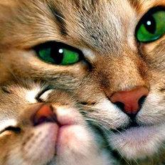 Набор в технике алмазная вышивка Кошка с котенком