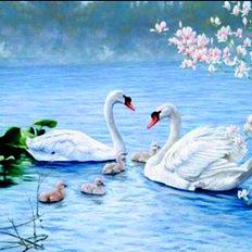 фото: картина в алмазной технике, Лебединая семья