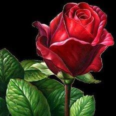 фото: картина в алмазной технике Алая роза