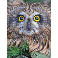 фото: картина в алмазной технике Глазастая сова