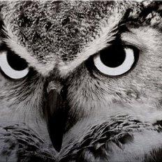 фото: картина в алмазной технике Взгляд совы