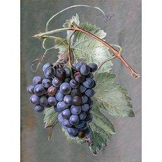 фото: картина для раскрашивания по номерам, Гроздь винограда