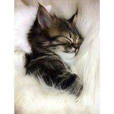 фото: картина для раскрашивания по номерам, Сладкий сон
