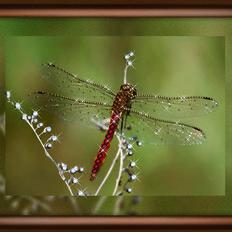 фото: картина со стразами, Полёт стрекозы
