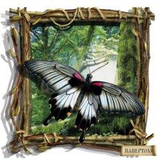 фото: картина в технике папертоль Бабочка черно-белая
