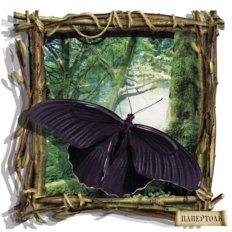 фото: картина в технике папертоль Бабочка черная
