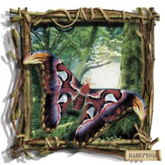 фото: набор папертоль Бабочка пестрая