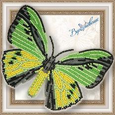 Набор для вышивания бисером на пластиковой канве Бабочка Птицекрыл Голиаф
